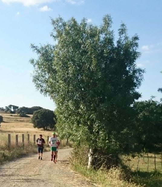 carrera tramo 2 (3)