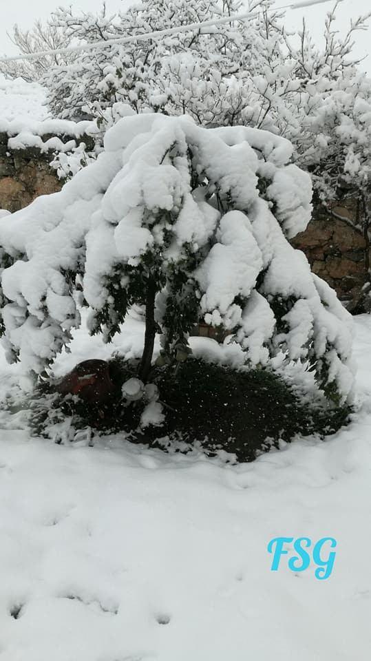 dias nieve (6)